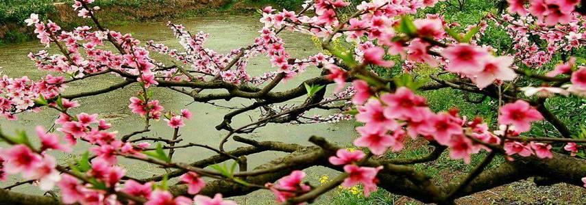 尚仁的诗:黑暗和桃花