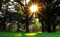 海子诗歌精选-夏天的太阳
