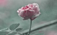 海子诗歌精选-冬天的雨