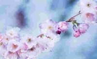 尚仁诗歌网编辑尚仁和大家分享一些尚仁的诗句