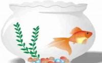 尚仁的诗和远方十六篇-鱼缸