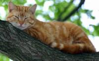 尚仁的诗和远方十七篇-窗子里的猫