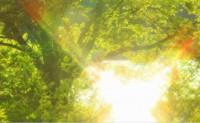 日光-海子诗歌精选