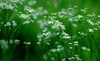 现代原创诗歌-绿色