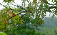 诗梦苑:现代诗歌秋雨、叶子、风