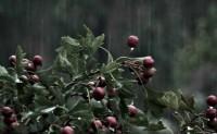 诗梦苑:现代诗歌 听雨
