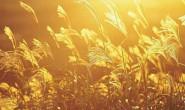 秋天的思念-【梦如烟】原创现代诗歌
