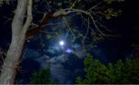十四行:夜晚的月亮-海子诗歌精选