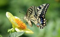你若盛开,蝴蝶自来;你若精彩,天自安排