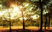 江西上饶诗人戴村方现代诗歌两首-清溪冬日晨景、重逢