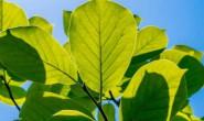 亚君原创现代抒情诗歌两首-树叶、邻居