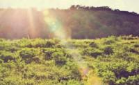 亚君原创现代诗歌两首-阳光下的生活、风雨中的树苗