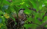 亚君原创现代诗歌投稿作品-屋檐下的小鸟