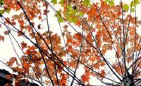 南朝水现代诗歌投稿作品-太阳、房子与梧桐的对话