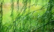 诗梦苑现代诗歌投稿作品-夏日的雨