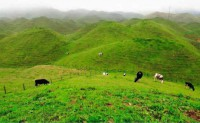 任雨现代诗歌投稿作品-南山下