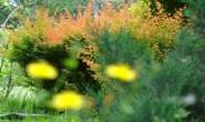 野草现代诗歌投稿作品-降生
