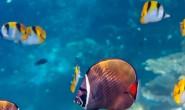 梦如烟描写鱼梦想的现代诗歌-鱼的梦想