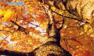 描写秋天的散文,关于秋天的文章[原创]-秋之美