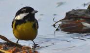 描写小鸟的原创现代诗歌-如果我是一只小鸟
