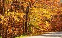 [涞伊] 赞美秋天的诗歌-秋的赞歌