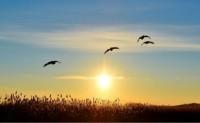[冯祖稳] 诗歌投稿作品三首-太极马三、黑云滚动遮黄昏、布谷鸟割谷又来到