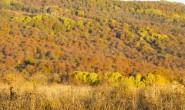 尚仁的诗歌-深秋的山谷