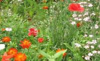 尚仁的诗歌-野花