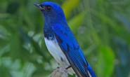 海子的诗-蓝姬的巢