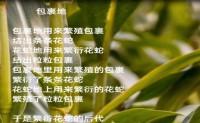 尚仁诗歌-包裹地(视频版)