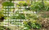 尚仁诗歌-花蛇地(视频版)