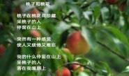 尚仁诗歌-桃子和桃花(视频版)