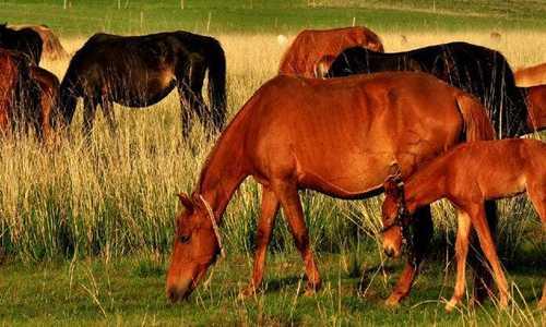 现代诗歌精选-海子的诗-祖国,或以梦为马