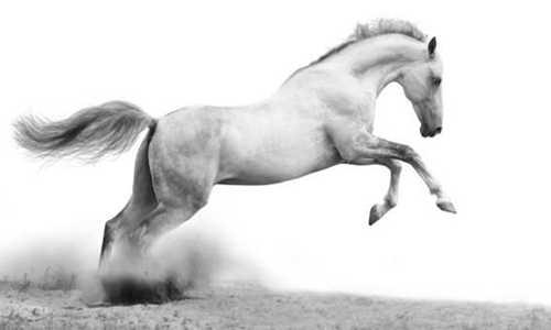 【心仪】诗歌投稿作品-诗与白马