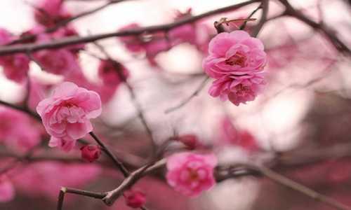 【刘桂军】原创诗歌投稿作品外六首