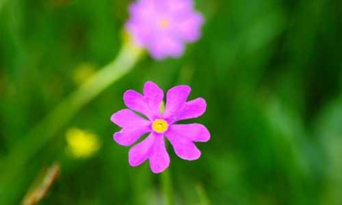 海子的诗无名的野花
