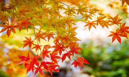 【青枫】原创诗歌投稿作品-那棵树的姿态