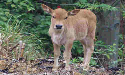 关于牛的诗句_有关牛的句子