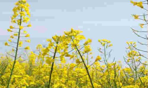 春天,十个海子-海子诗歌精选