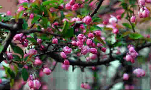 面朝大海,春暖花开-海子诗歌精选