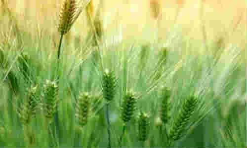 麦收之后-四川虬髯客的诗歌