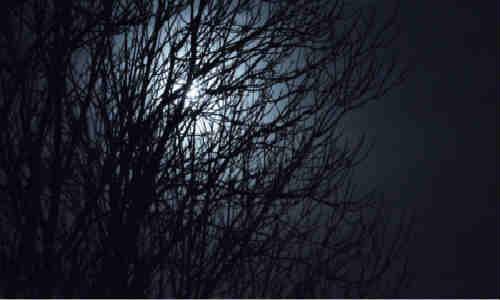 原创诗歌共享-色与夜