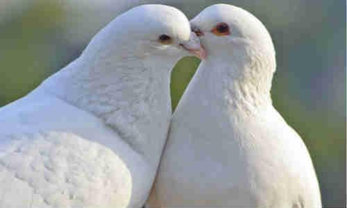 尚仁的诗和远方十四篇-鸽子的后脑勺