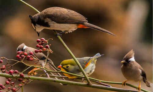 尚仁的诗和远方十八篇-鸟
