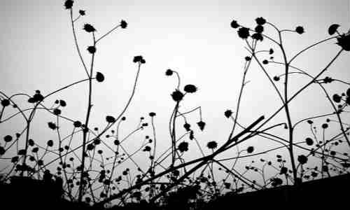 尚仁的诗和远方二十一-生存