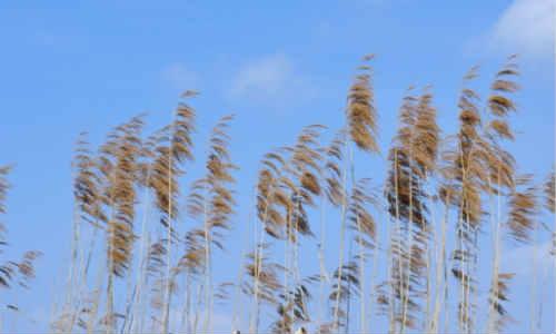 描写风的诗歌