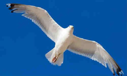 尚仁早期学习诗歌自由的人-海鸟的泪