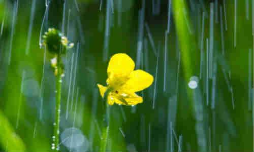 【丹山】原创诗歌-雨