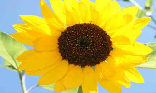 尚仁的诗和远方-坛子和葵花