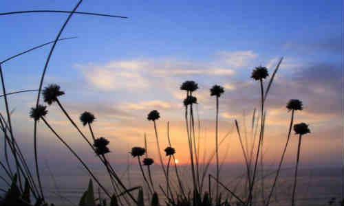 乐观从容的诗歌-乐观从容的走